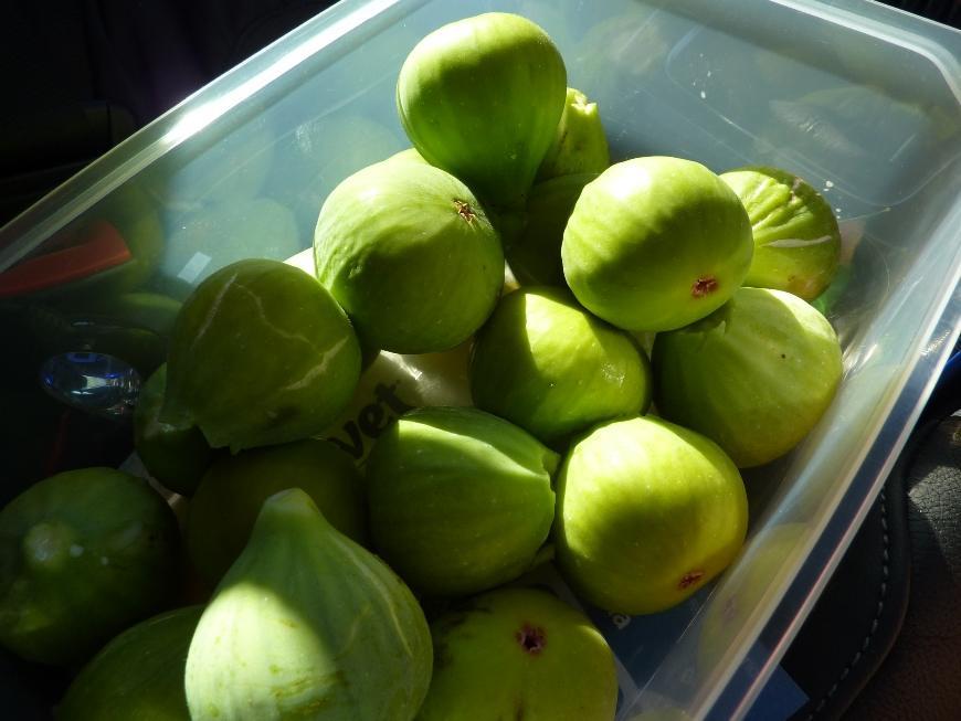 Chorwacja: figi - samodzielnie zbierane