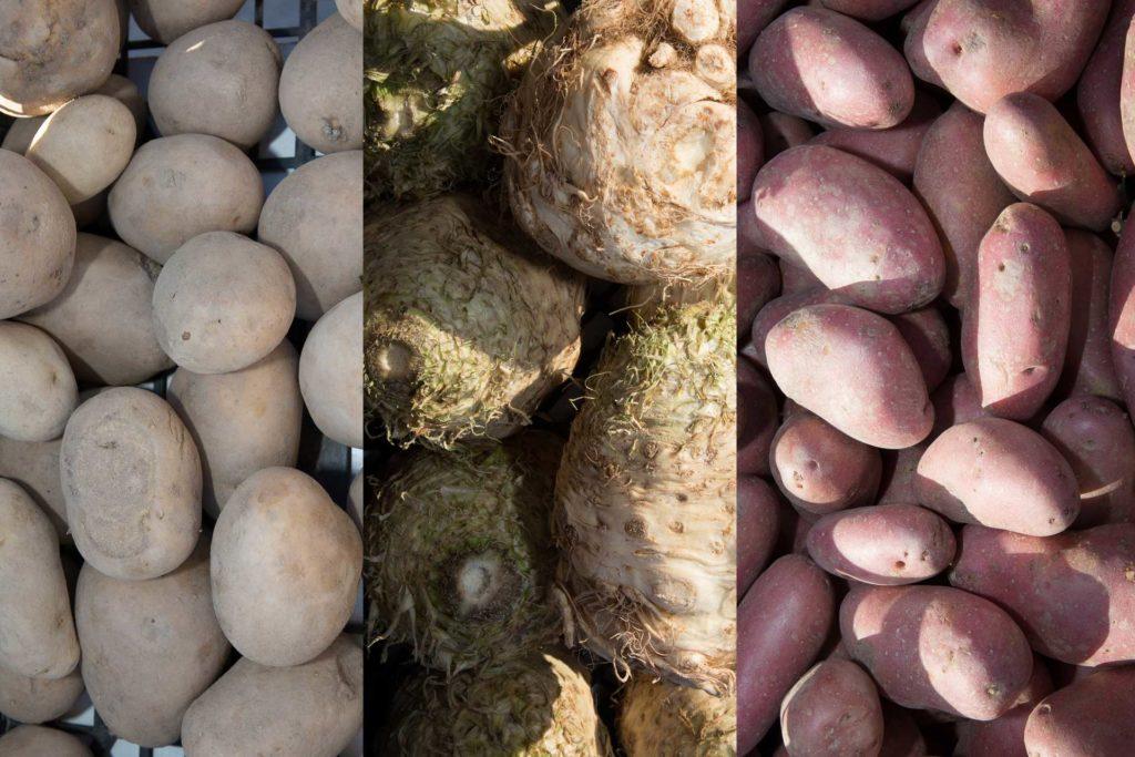 seler-vs-ziemniak