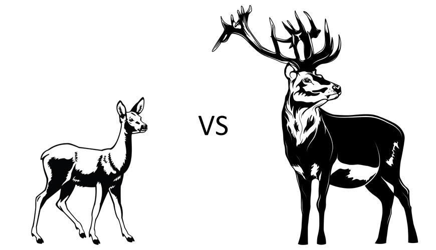 czy-jelen-to-maz-sarny.jpg