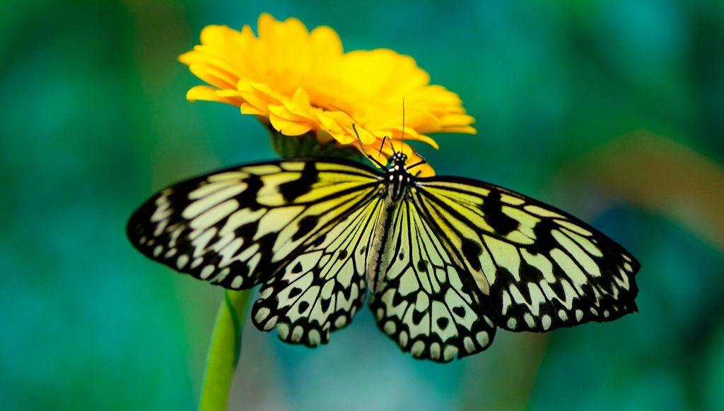 motyl-hashimoto-czy-mozna-wyleczyc-iwona-wierzbicka